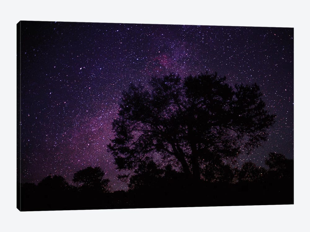 Starry Sky With Silhouetted Oak Tree by Tim Fitzharris 1-piece Canvas Wall Art