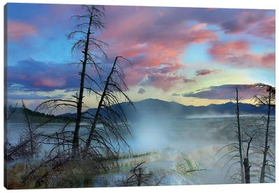 Steam Rising From Travertine Formations, Minerva Terrace, Mammoth Hot Springs, Yellowstone National Park, Wyoming Canvas Art Print