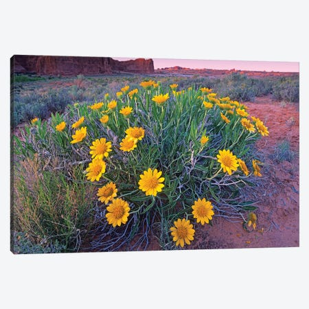 Sunflowers And Buttes, Capitol Reef National Park, Utah Canvas Print #TFI1043} by Tim Fitzharris Art Print