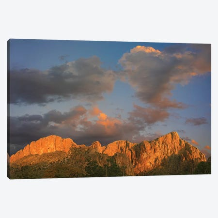 Sunlight Illuminating Chisos Mountains, Chihuahuan Desert, Texas Canvas Print #TFI1044} by Tim Fitzharris Canvas Artwork