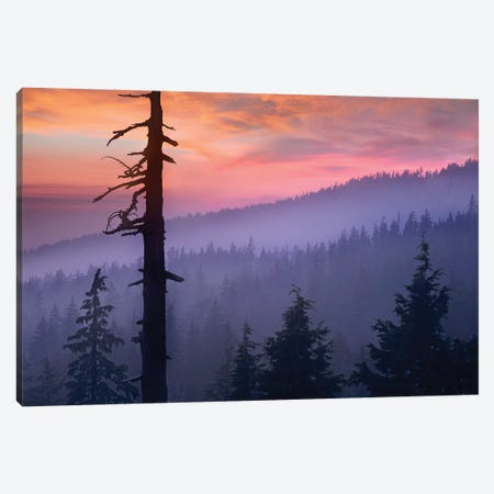 Sunset Over Forest, Crater Lake National Park, Oregon Canvas Print #TFI1059} by Tim Fitzharris Canvas Wall Art