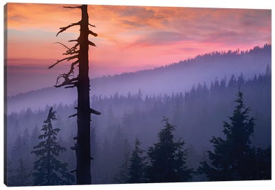 Sunset Over Forest, Crater Lake National Park, Oregon Canvas Art Print