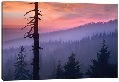 Sunset Over Forest, Crater Lake National Park, Oregon Canvas Art Print