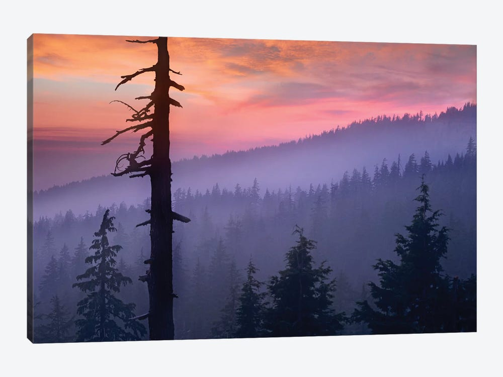 Sunset Over Forest, Crater Lake National Park, Oregon by Tim Fitzharris 1-piece Art Print