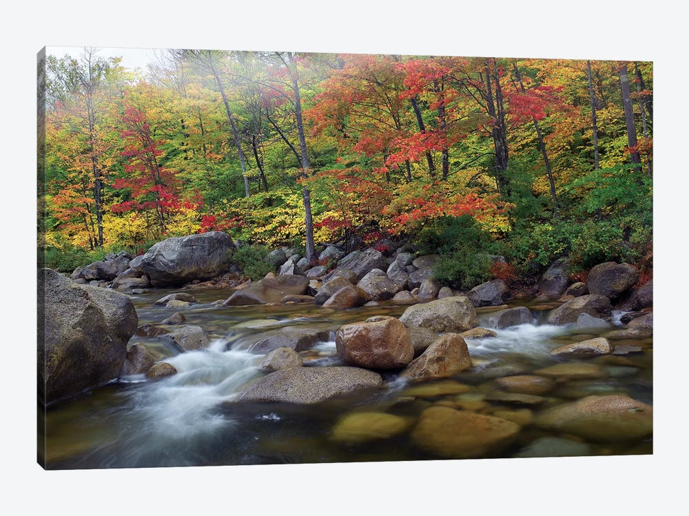Swift River Flowing Through Fall Colored Forest, White Mountains National Forest, New Hampshire by Tim Fitzharris 1-piece Art Print