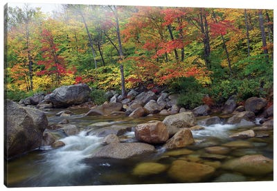 Swift River Flowing Through Fall Colored Forest, White Mountains National Forest, New Hampshire Canvas Art Print