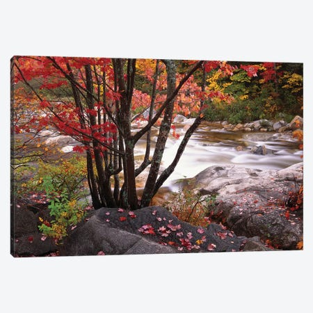 Swift River Near Rocky Gorge, White Mountains National Forest, New Hampshire Canvas Print #TFI1072} by Tim Fitzharris Canvas Artwork