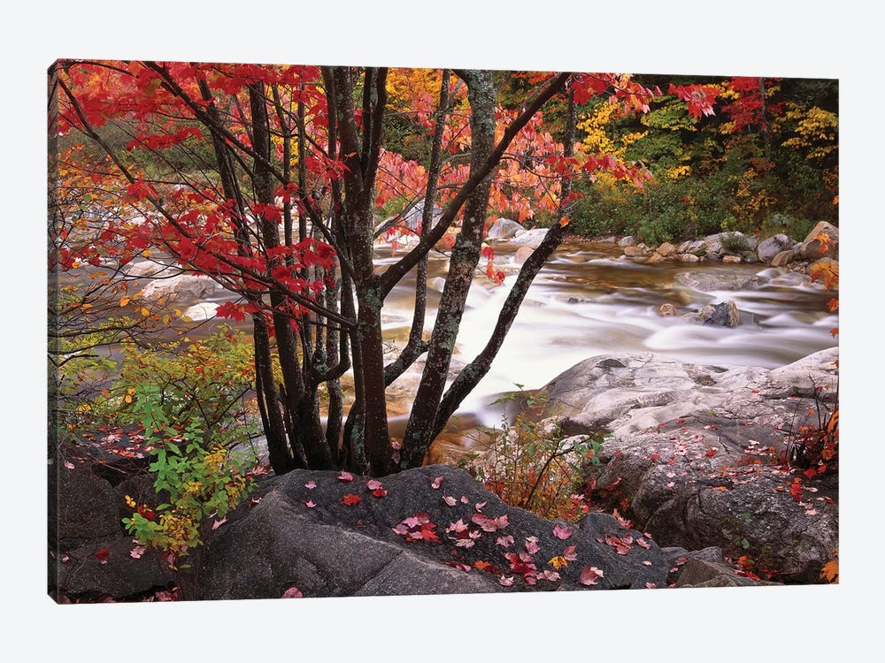 Swift River Near Rocky Gorge, White Mountains National Forest, New Hampshire by Tim Fitzharris 1-piece Canvas Artwork