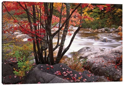 Swift River Near Rocky Gorge, White Mountains National Forest, New Hampshire Canvas Art Print
