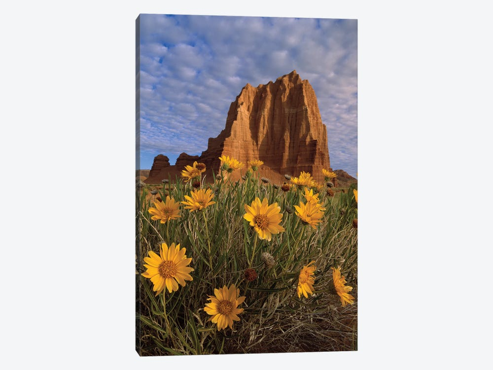 Temple Of The Sun With Sunflowers In The Foreground, Capitol Reef National Park, Utah by Tim Fitzharris 1-piece Canvas Art Print