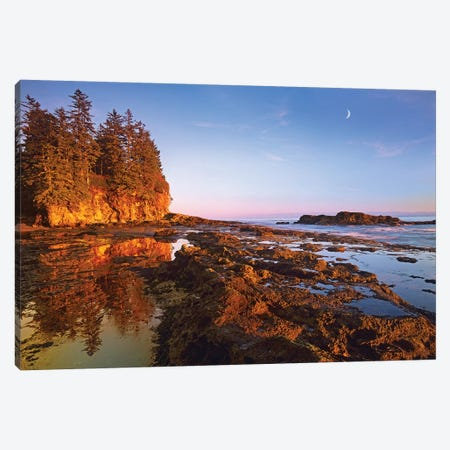 Tidepools Exposed At Low Tide, Botanical Beach, Juan De Fuca Provincial Park, Vancouver Island, British Columbia, Canada Canvas Print #TFI1093} by Tim Fitzharris Canvas Artwork