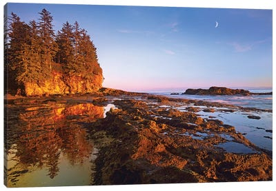 Tidepools Exposed At Low Tide, Botanical Beach, Juan De Fuca Provincial Park, Vancouver Island, British Columbia, Canada Canvas Art Print
