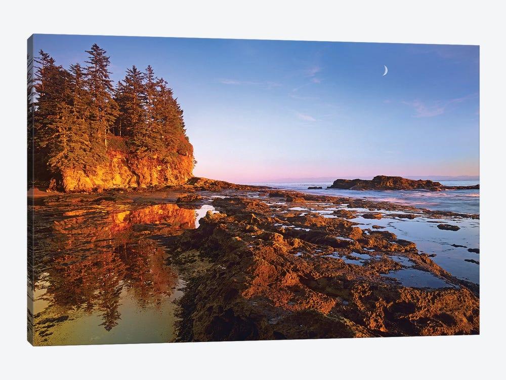 Tidepools Exposed At Low Tide, Botanical Beach, Juan De Fuca Provincial Park, Vancouver Island, British Columbia, Canada by Tim Fitzharris 1-piece Canvas Art Print
