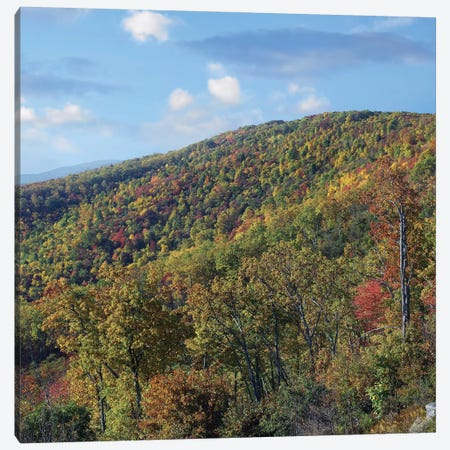 Blue Ridge Range From Moormans River Overlook, Shenandoah National Park, Virginia Canvas Print #TFI109} by Tim Fitzharris Art Print