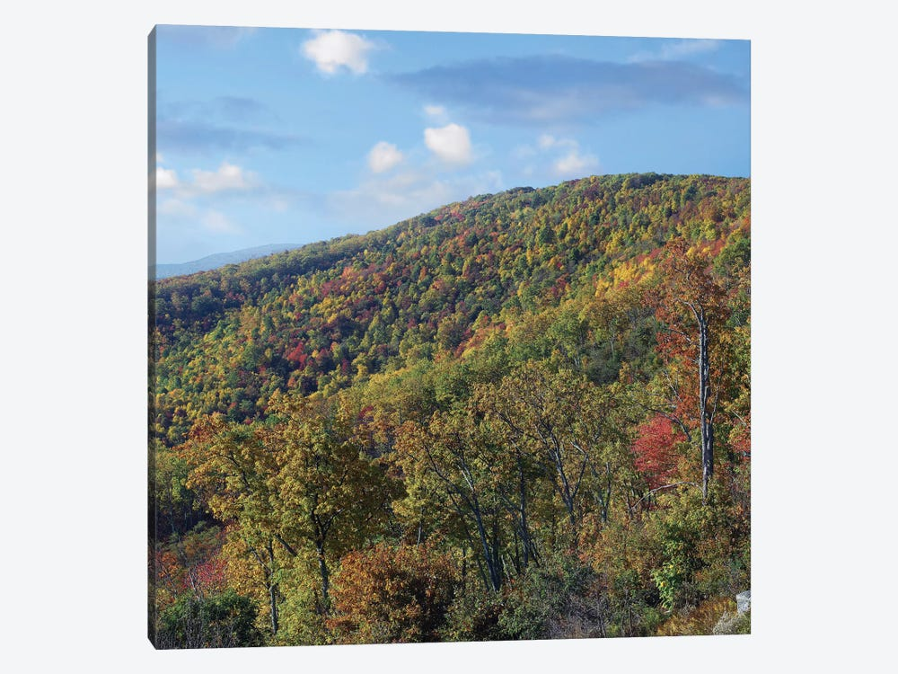 Blue Ridge Range From Moormans River Overlook, Shenandoah National Park, Virginia by Tim Fitzharris 1-piece Canvas Art