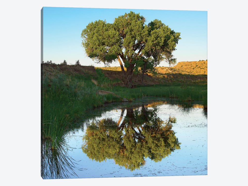 Tree Reflecting In Creek Near Black Mesa State Park, Oklahoma by Tim Fitzharris 1-piece Art Print
