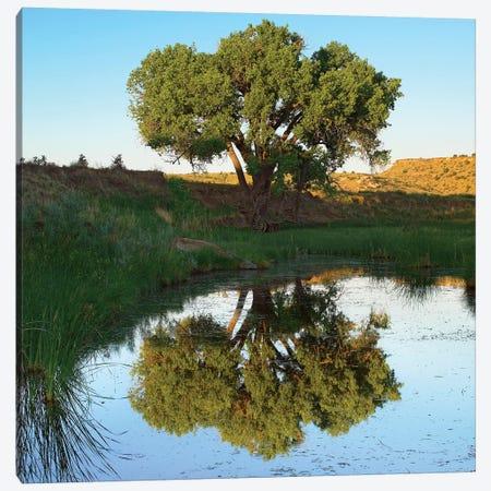 Tree Reflecting In Creek Near Black Mesa State Park, Oklahoma 3-Piece Canvas #TFI1109} by Tim Fitzharris Canvas Wall Art