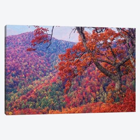 Blue Ridge Range With Autumn Deciduous Forest, Near Buck Creek Gap, North Carolina Canvas Print #TFI110} by Tim Fitzharris Canvas Artwork