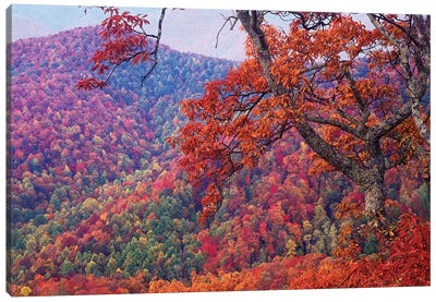 Blue Ridge Range With Autumn Deciduous Forest, Near Buck Creek Gap, North Carolina Canvas Art Print
