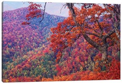 Blue Ridge Range With Autumn Deciduous Forest, Near Buck Creek Gap, North Carolina Canvas Art Print