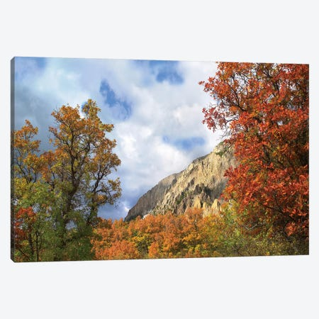 Trees And Shrubs In Autumn, Marcellina Mountain, Raggeds Wilderness, Colorado Canvas Print #TFI1110} by Tim Fitzharris Canvas Print
