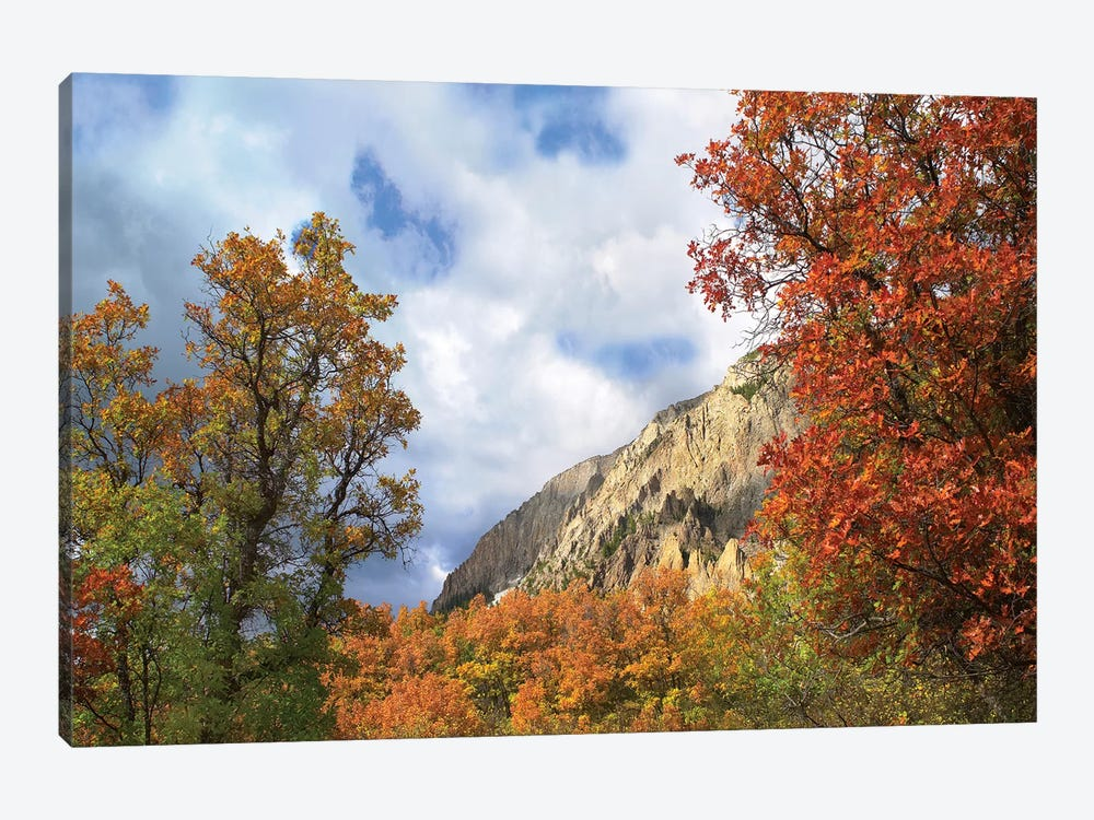 Trees And Shrubs In Autumn, Marcellina Mountain, Raggeds Wilderness, Colorado by Tim Fitzharris 1-piece Art Print