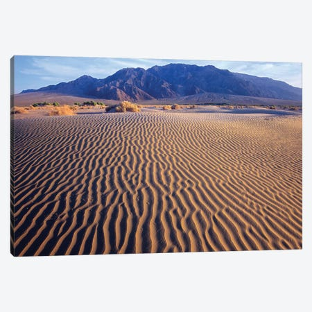 Tucki Mountain And Mesquite Flat Sand Dunes, Death Valley National Park, California Canvas Print #TFI1114} by Tim Fitzharris Canvas Wall Art