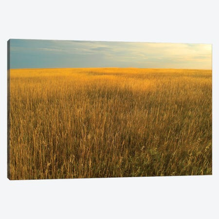 Upper Prairie In Badlands National Park, South Dakota Canvas Print #TFI1117} by Tim Fitzharris Canvas Artwork
