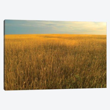 Upper Prairie In Badlands National Park, South Dakota Canvas Print #TFI1117} by Tim Fitzharris Canvas Artwork