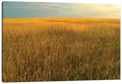 Upper Prairie In Badlands National Park, South Dakota Canvas Art Print