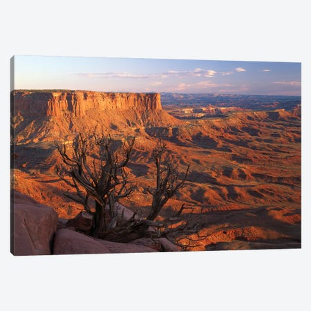 View From Green River Overlook, Canyonlands National Park, Utah I Canvas Print #TFI1120} by Tim Fitzharris Canvas Wall Art