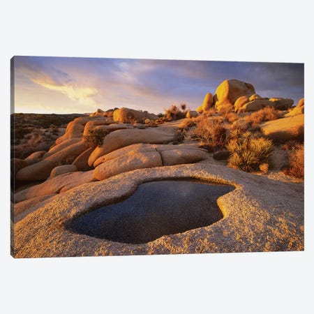 Water That Has Collected In Boulder, Joshua Tree National Park, California Canvas Print #TFI1129} by Tim Fitzharris Canvas Wall Art