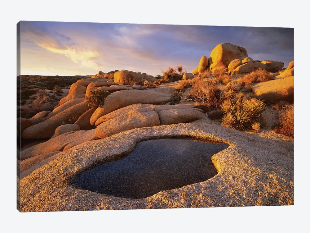 Water That Has Collected In Boulder, Joshua Tree National Park, California by Tim Fitzharris 1-piece Art Print