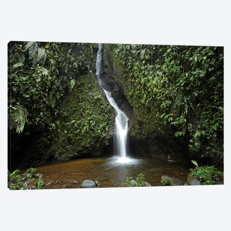 Waterfall In The Milpe Bird Sanctuary, Mindo Cloud Forest, Ecuador Canvas Print #TFI1131} by Tim Fitzharris Canvas Print