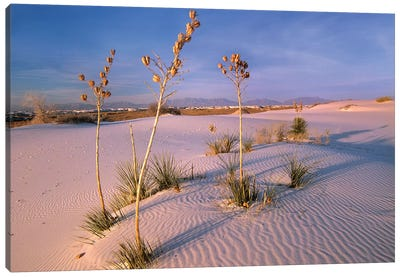 White Sands National Monument, New Mexico II Canvas Art Print