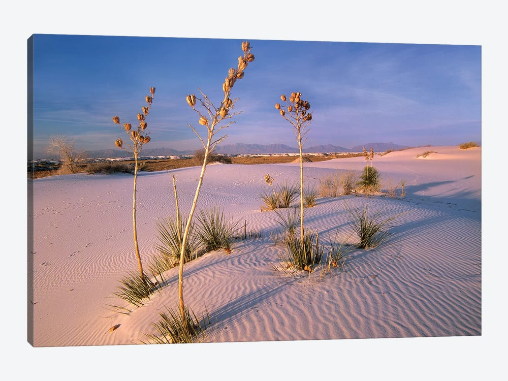 White Sands National Monument, New Mexico II by Tim Fitzharris 1-piece Canvas Print