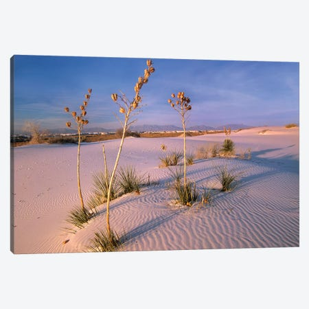 White Sands National Monument, New Mexico II Canvas Print #TFI1152} by Tim Fitzharris Art Print
