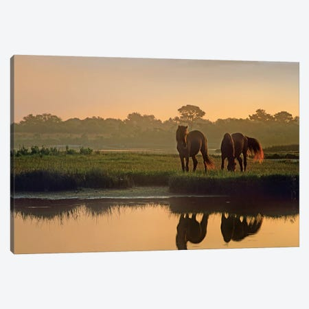 Wild Horse Pair Grazing At Assateague Island National Seashore, Maryland 3-Piece Canvas #TFI1158} by Tim Fitzharris Art Print