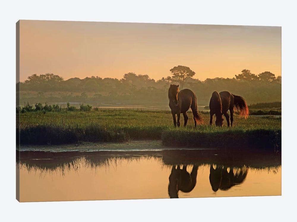 Wild Horse Pair Grazing At Assateague Island National Seashore, Maryland by Tim Fitzharris 1-piece Canvas Print