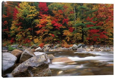 Wild River In Eastern Hardwood Forest, White Mountains National Forest, Maine Canvas Art Print