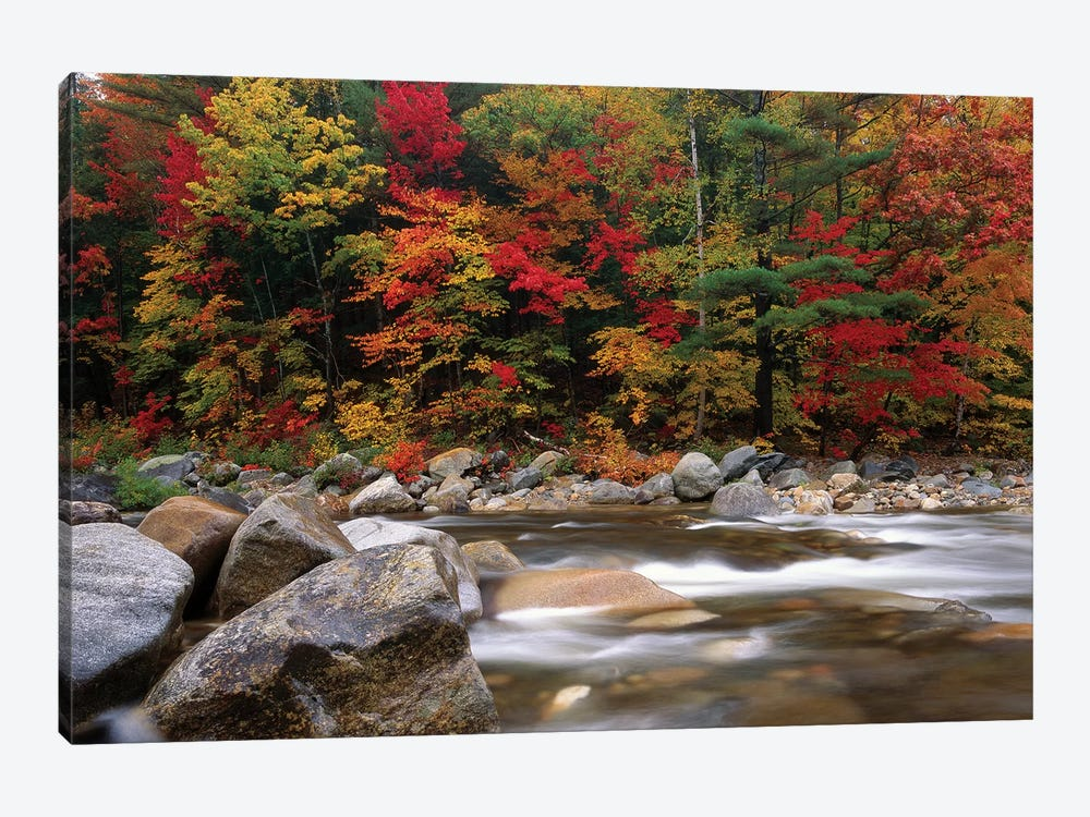 Wild River In Eastern Hardwood Forest, White Mountains National Forest, Maine by Tim Fitzharris 1-piece Canvas Wall Art