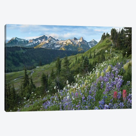 Wildflowers And Tatoosh Range, Mount Rainier National Park, Washington Canvas Print #TFI1162} by Tim Fitzharris Canvas Artwork