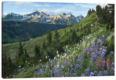 Wildflowers And Tatoosh Range, Mount Rainier National Park, Washington Canvas Art Print