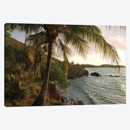Wilkes Point At Sunset With Palm Trees, Roatan Island, Honduras 3-Piece Canvas #TFI1165} by Tim Fitzharris Art Print