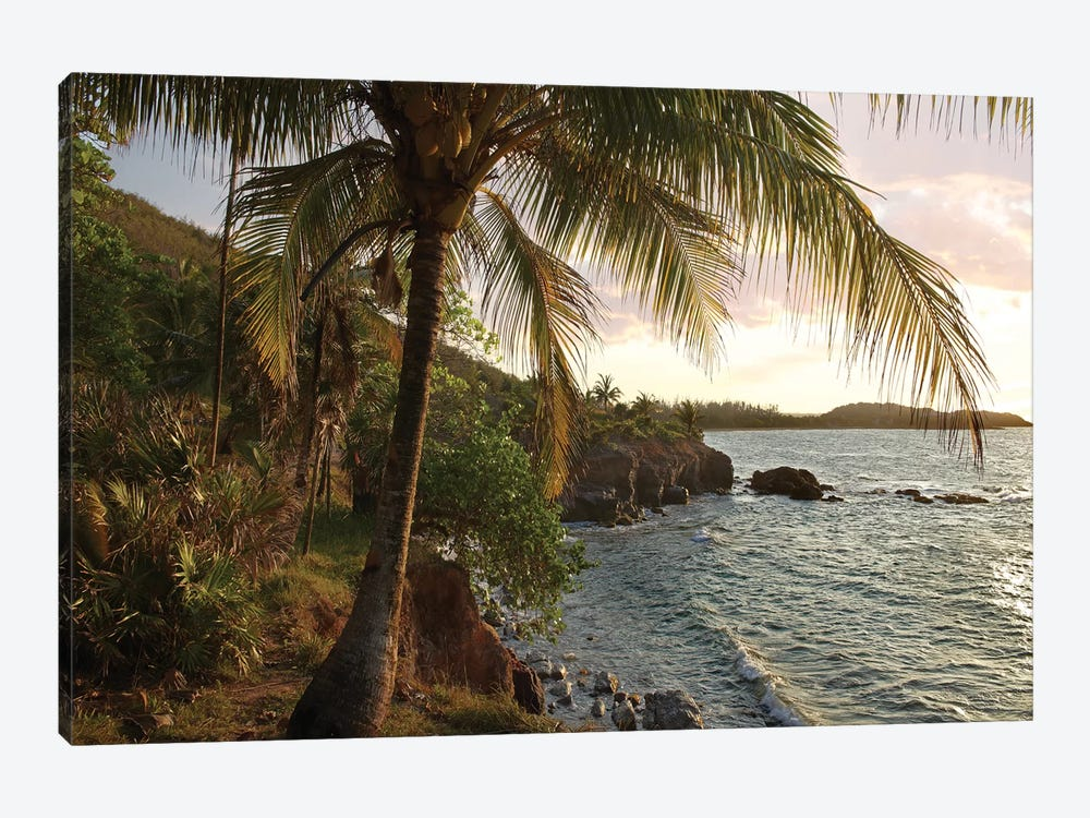 Wilkes Point At Sunset With Palm Trees, Roatan Island, Honduras by Tim Fitzharris 1-piece Canvas Art Print