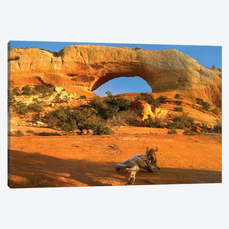 Wilson Arch With A Span Of 91 Feet And Height Of 46 Feet, Off Of Highway 191, Made Of Entrada Sandstone, Utah II Canvas Print #TFI1167} by Tim Fitzharris Canvas Print