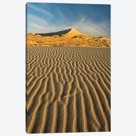 Wind Ripples In Kelso Dunes, Mojave National Preserve, California Canvas Print #TFI1168} by Tim Fitzharris Canvas Artwork
