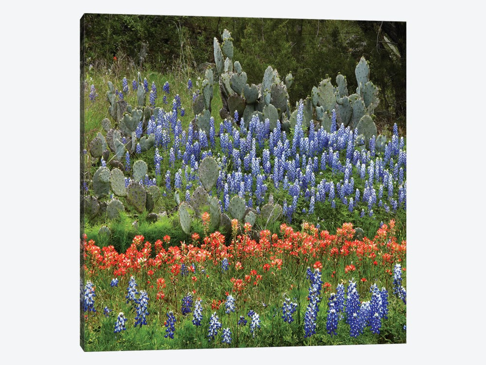 Bluebonnet, Paintbrush Cactus, Texas And Pricky Pear - Horizontal by Tim Fitzharris 1-piece Canvas Art