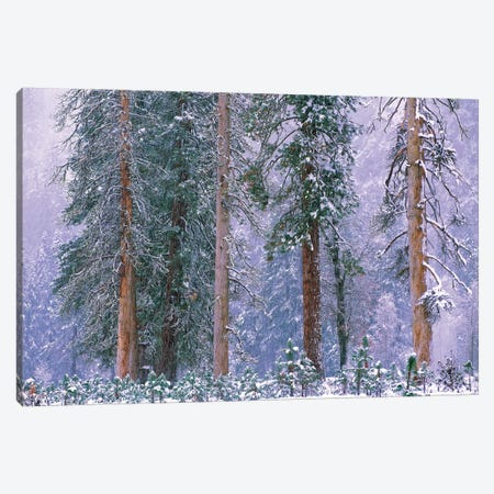 Winter In Yosemite National Park, California Canvas Print #TFI1174} by Tim Fitzharris Canvas Art