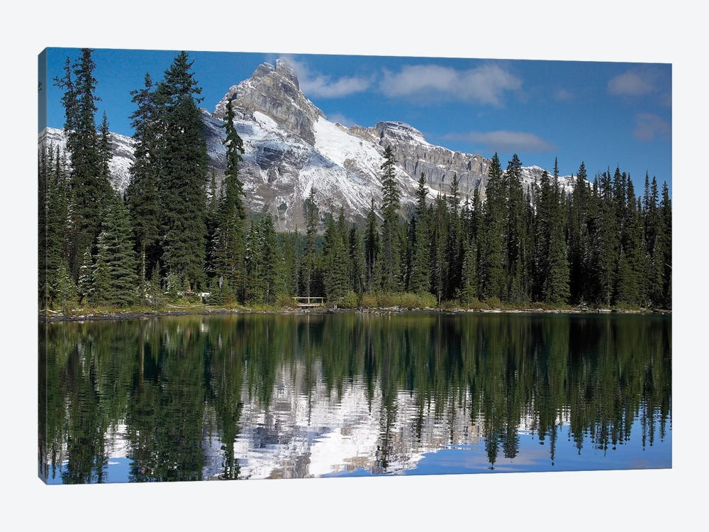 Wiwaxy Peaks And Cathedral Mountain At Lake O'Hara, Yoho National Park, British Columbia, Canada I by Tim Fitzharris 1-piece Canvas Art